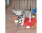 don de chiots chihuahua urgent
