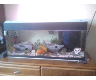 Aquarium avec poisson en vente for Vente poisson aquarium particulier