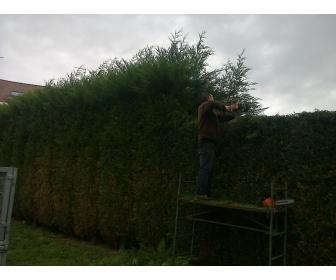 Jardinier réalise tous vos travaux de jardin 2