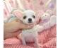 chiot type chihuahua beige et blanc à vendre