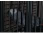 perroquet galon gris