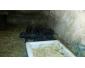 Cochons nains vietnamiens à vendre
