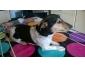 A donner chien mal croisé jack russel 1 ans