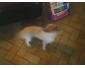 Petit chien à donner Namur