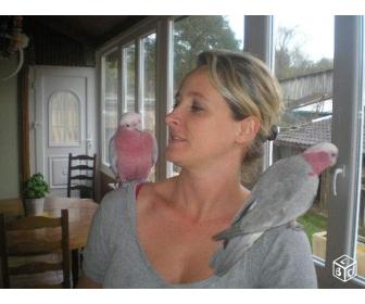 je donne en urgence mon couple de perroquet Cacatoes Rosalbin 1