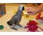 Adorable perroquet gris du gabon femelle