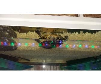 Aquarium à vendre à Namur 2