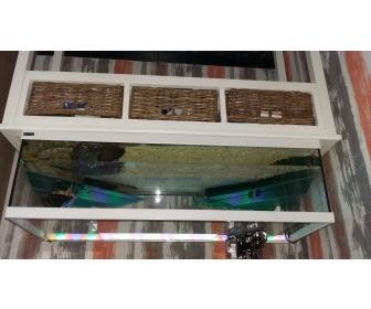 Aquarium à vendre à Namur 1