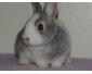 Bébés lapins à adopter