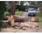 Si vous avez des arbres à abattre