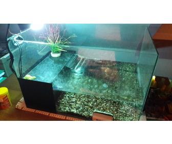 aquarium pour tortue d 39 eau douce. Black Bedroom Furniture Sets. Home Design Ideas