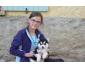 Adorable Siberian Husky Femelle à donner