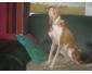 Garde chien pet sitter